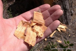 Pitchwood is a resin-infused piece of pine that is waterproof and highly flammable.