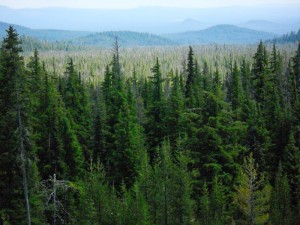 Wilderness area, Oregon Cascades.